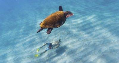 sea turtle and swimmer