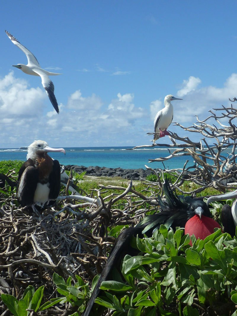 the role seabirds play in our oceans