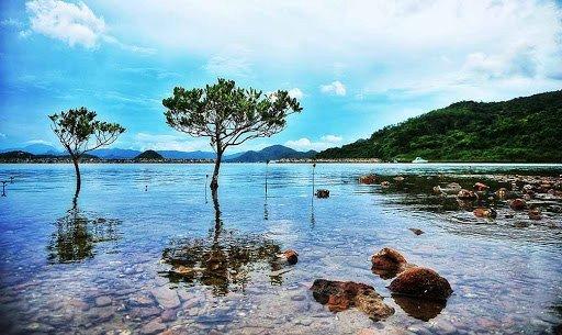 mangrove woodlands