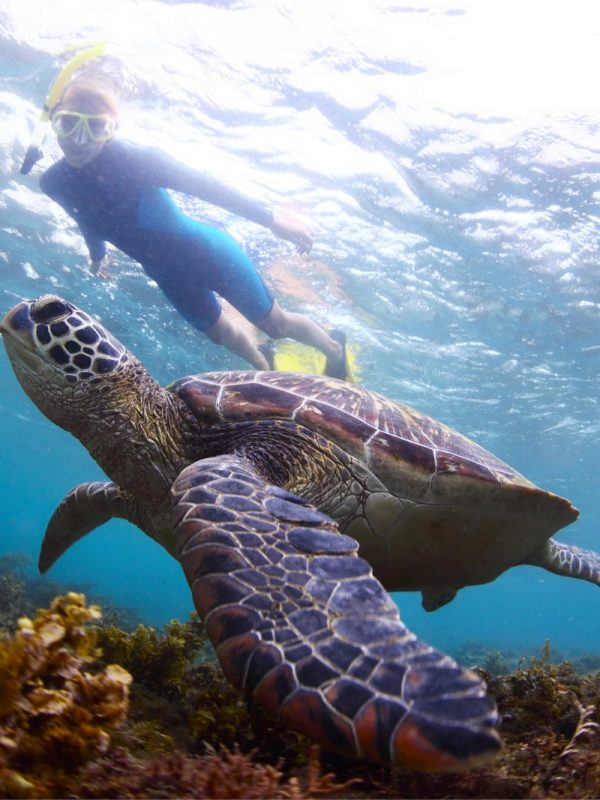 snorkeling-with-turtles